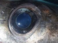 Swordfish Eye